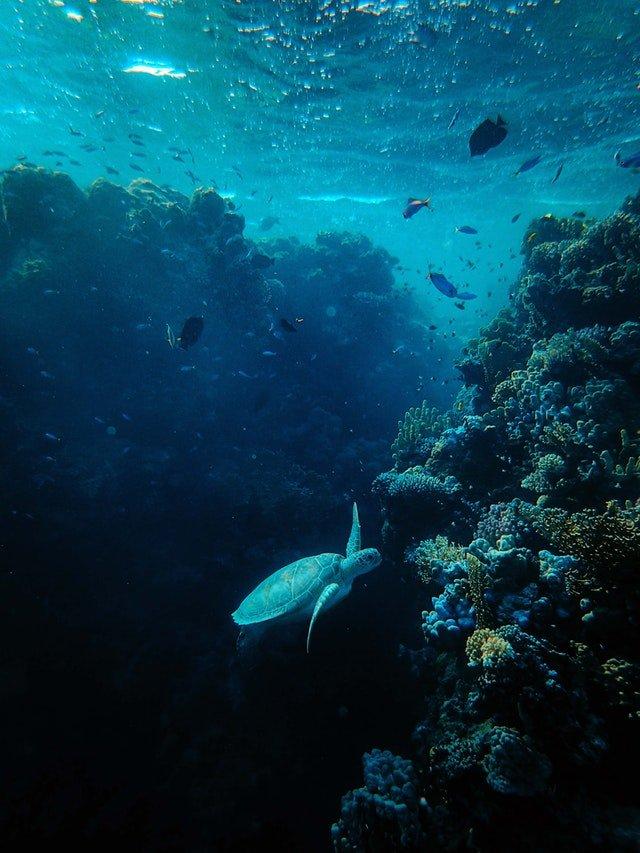 Global Aquaculture market to reach $42.16 Billion in 2025