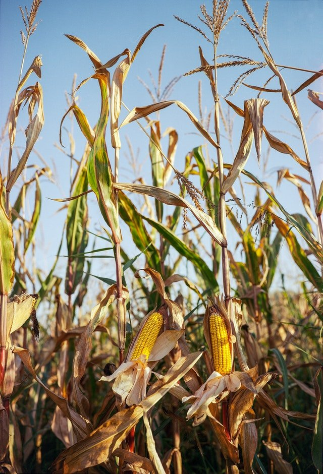reogma|Global Crop Protection Chemicals Pesticides market to reach US$ 70.57B by 2021