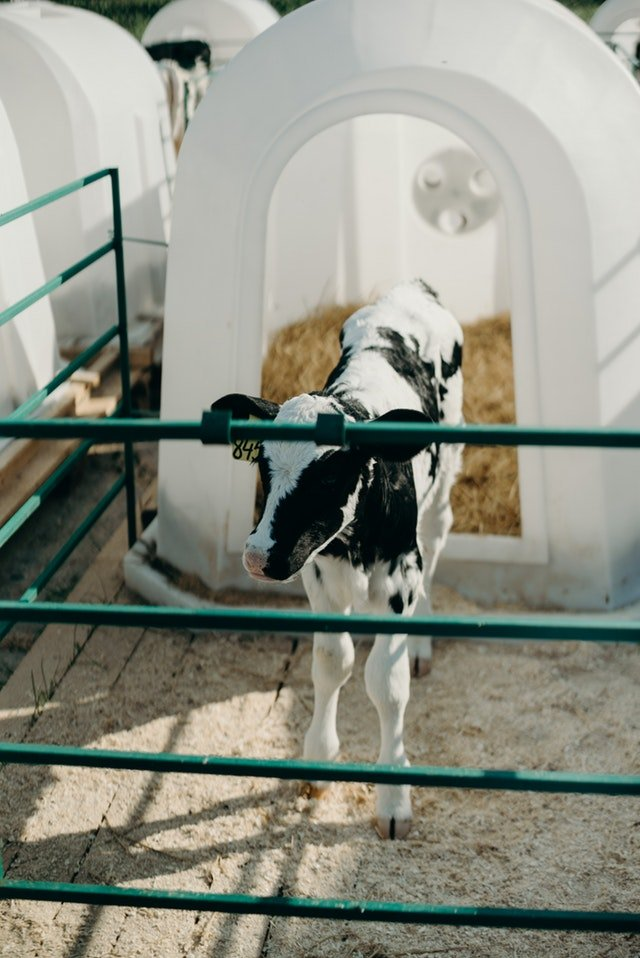 reogma|Dairy industry in Japan growing at under 2% annually until 2021